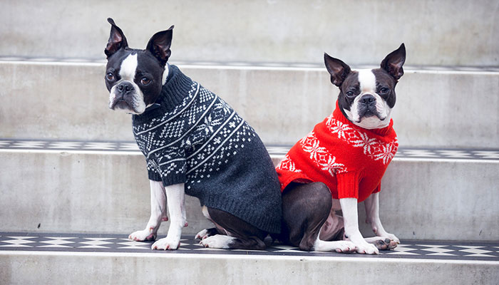 POSH POOCH CHRISTMAS GIFT GUIDE