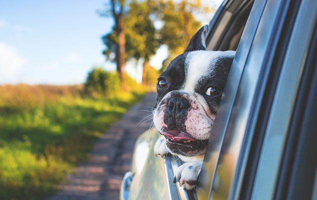 DOG-FRIENDLY DAYS OUT