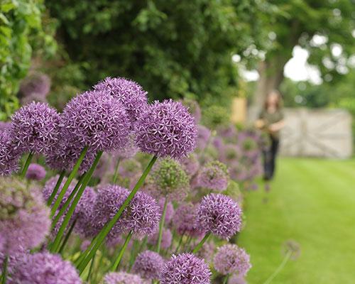 Cleveland Tontine gardens