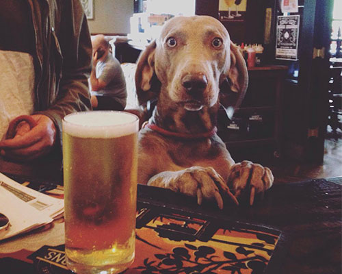 POOCH-FRIENDLY PUBS IN THE NORTH EAST