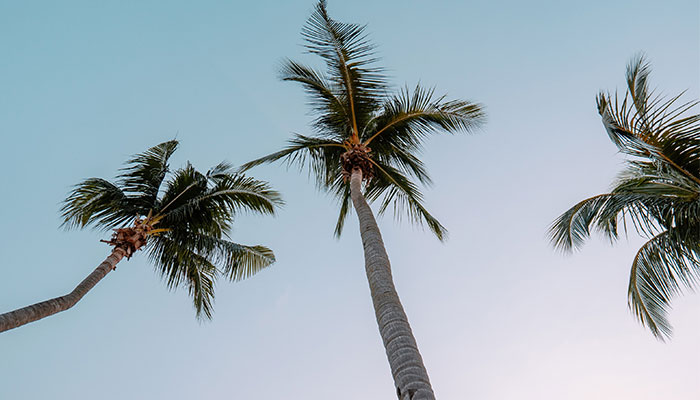 GO NUTS FOR COCONUTS THIS SUMMER
