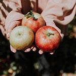 Gibside apples