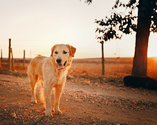 DOG-FRIENDLY TRAVEL TRENDS FOR 2019