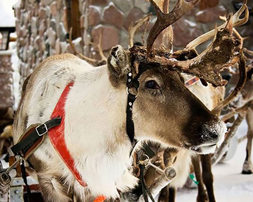 Reindeer Trail at Wynyard Hall