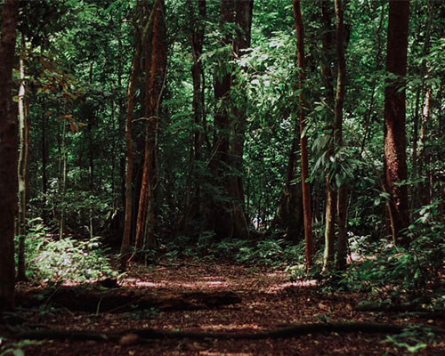 Join a woodland wellness walk at Swinton Estate
