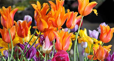 WIN - Harrogate Spring Flower Show