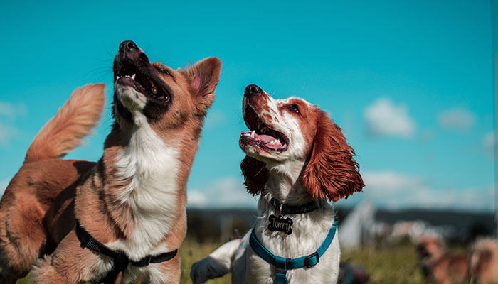 2020 DIARY DATES FOR DOGS