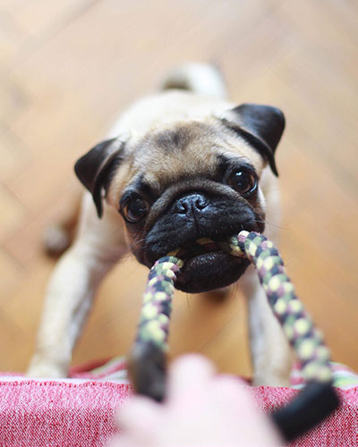 10 BOREDOM BUSTERS TO KEEP YOUR POOCH ENTERTAINED