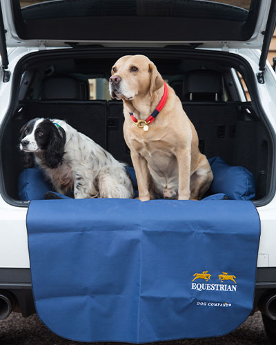 What To Pack For Your Dogs Staycation