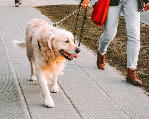 Dog-Friendly Walks