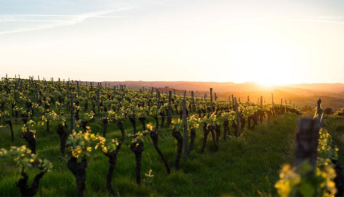 Best vineyards